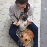 Nicole M - Profile for Pet Hosting in Australia