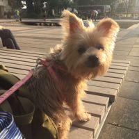 ivy t - Profile for Pet Hosting in Australia