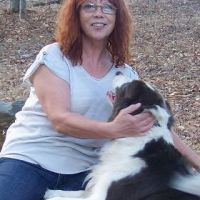 Phillis L - Profile for Pet Hosting in Australia