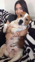 Samantha N - Profile for Pet Hosting in Australia