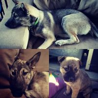 Bodin P - Profile for Pet Hosting in Australia