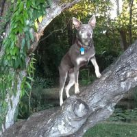 Kathy T - Profile for Pet Hosting in Australia
