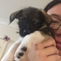Renee L - Profile for Pet Hosting in Australia
