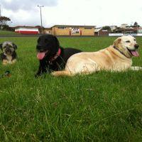 Warrnambool Pet Minding : - Profile for Pet Hosting in Australia