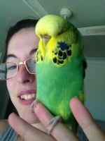 Ashlei B - Profile for Pet Hosting in Australia