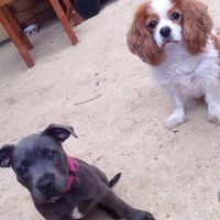 chelsea g - Profile for Pet Hosting in Australia