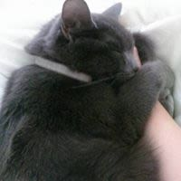 Alkira J - Profile for Pet Hosting in Australia