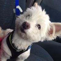 Kiara R - Profile for Pet Hosting in Australia