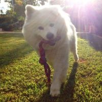 Thomas O - Profile for Pet Hosting in Australia