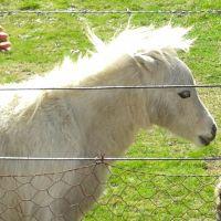 Y T - Profile for Pet Hosting in Australia