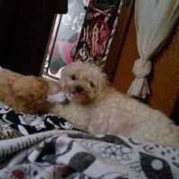 Ally L - Profile for Pet Hosting in Australia
