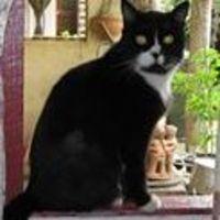 Kumari C - Profile for Pet Hosting in Australia