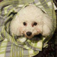 Gabriela V - Profile for Pet Hosting in Australia