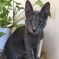 Alison H - Profile for Pet Hosting in Australia