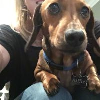Mollie B - Profile for Pet Hosting in Australia