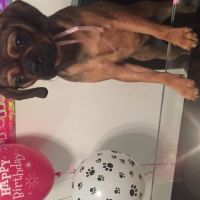 Jess R - Profile for Pet Hosting in Australia