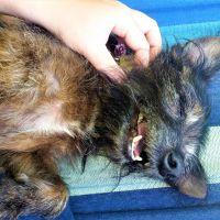 Joanne C - Profile for Pet Hosting in Australia