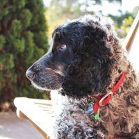 Bree H - Profile for Pet Hosting in Australia
