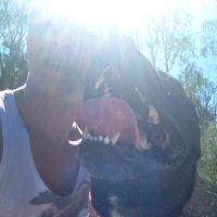 jacob m - Profile for Pet Hosting in Australia