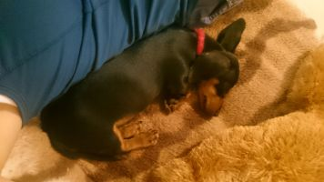 Annie M - Profile for Pet Hosting in Australia