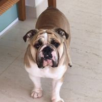 Lucas D - Profile for Pet Hosting in Australia