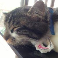 julie W - Profile for Pet Hosting in Australia