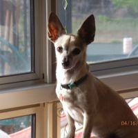 Carmel L - Profile for Pet Hosting in Australia