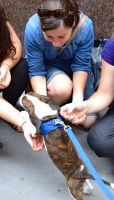 Olivia B - Profile for Pet Hosting in Australia