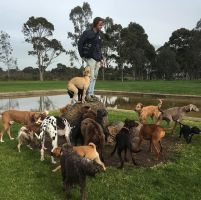 Sam W - Profile for Pet Hosting in Australia