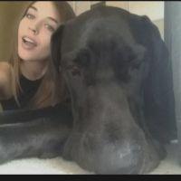 Koedi M - Profile for Pet Hosting in Australia