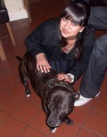krishna k - Profile for Pet Hosting in Australia