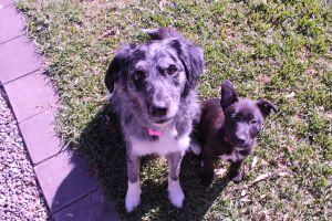 Sarah S - Profile for Pet Hosting in Australia