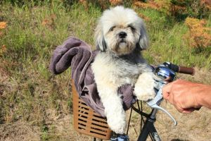 Oceane S - Profile for Pet Hosting in Australia