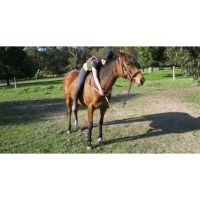Victoria S - Profile for Pet Hosting in Australia