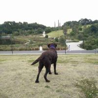 Graham A - Profile for Pet Hosting in Australia