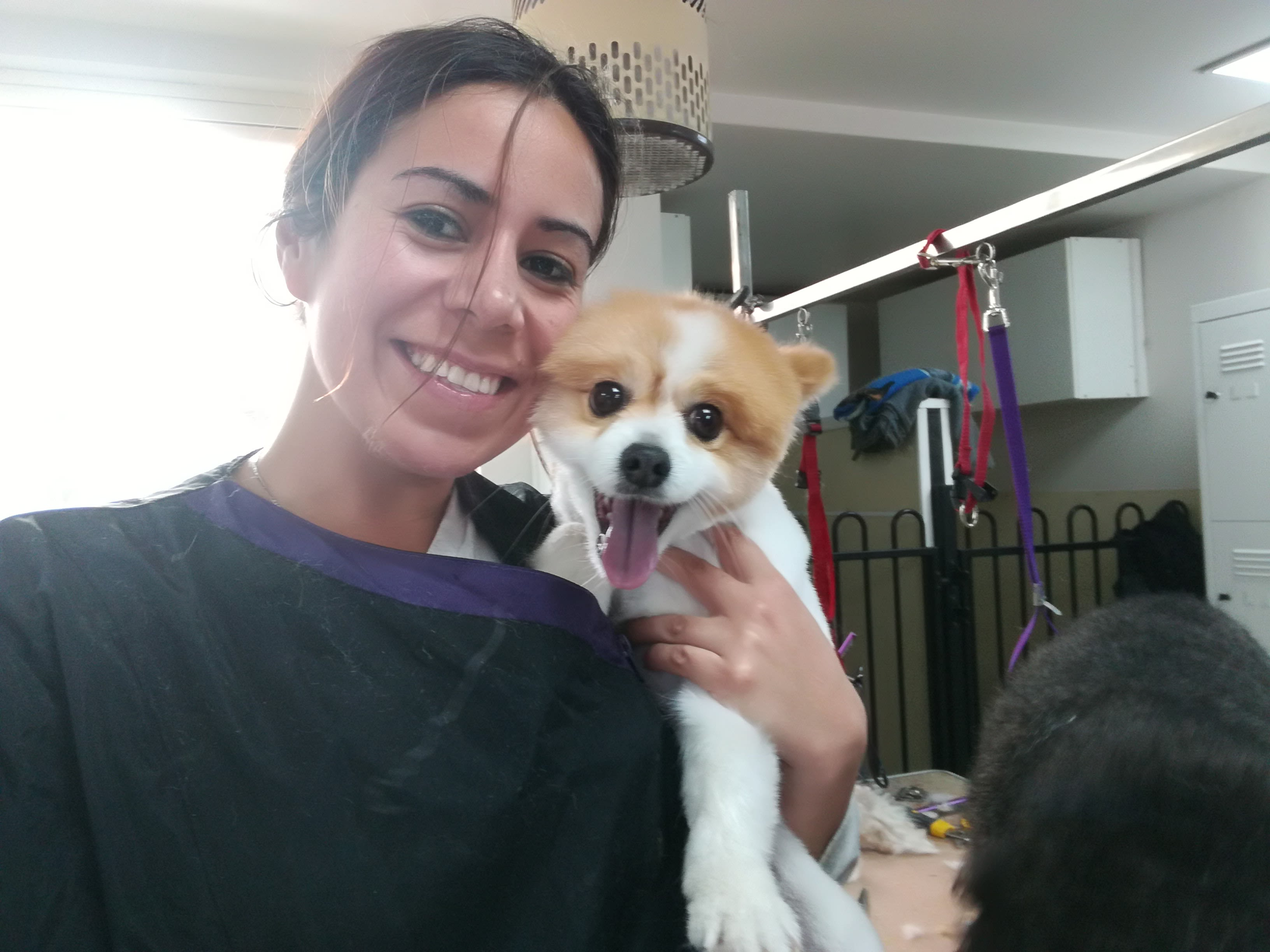 Dog grooming melbourne 57 sitters madpaws professional veterinarian caring your pet solutioingenieria Images