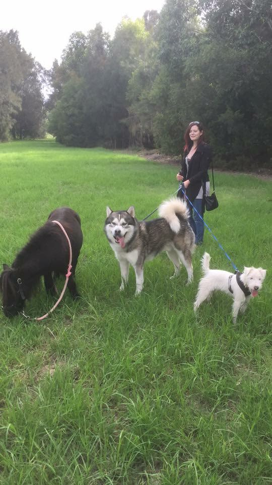 Passionate experienced animal carer in Western Sydney