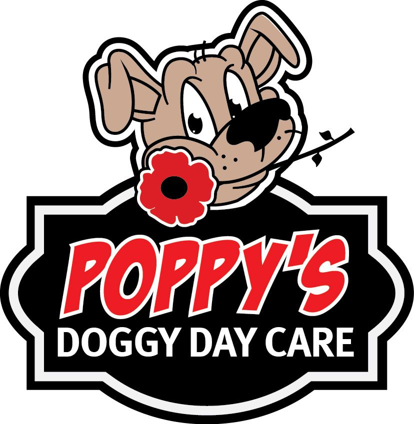 The best doggy day care on the Peninsula