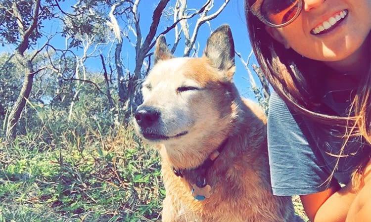 Dog lover based on the Sunshine Coast