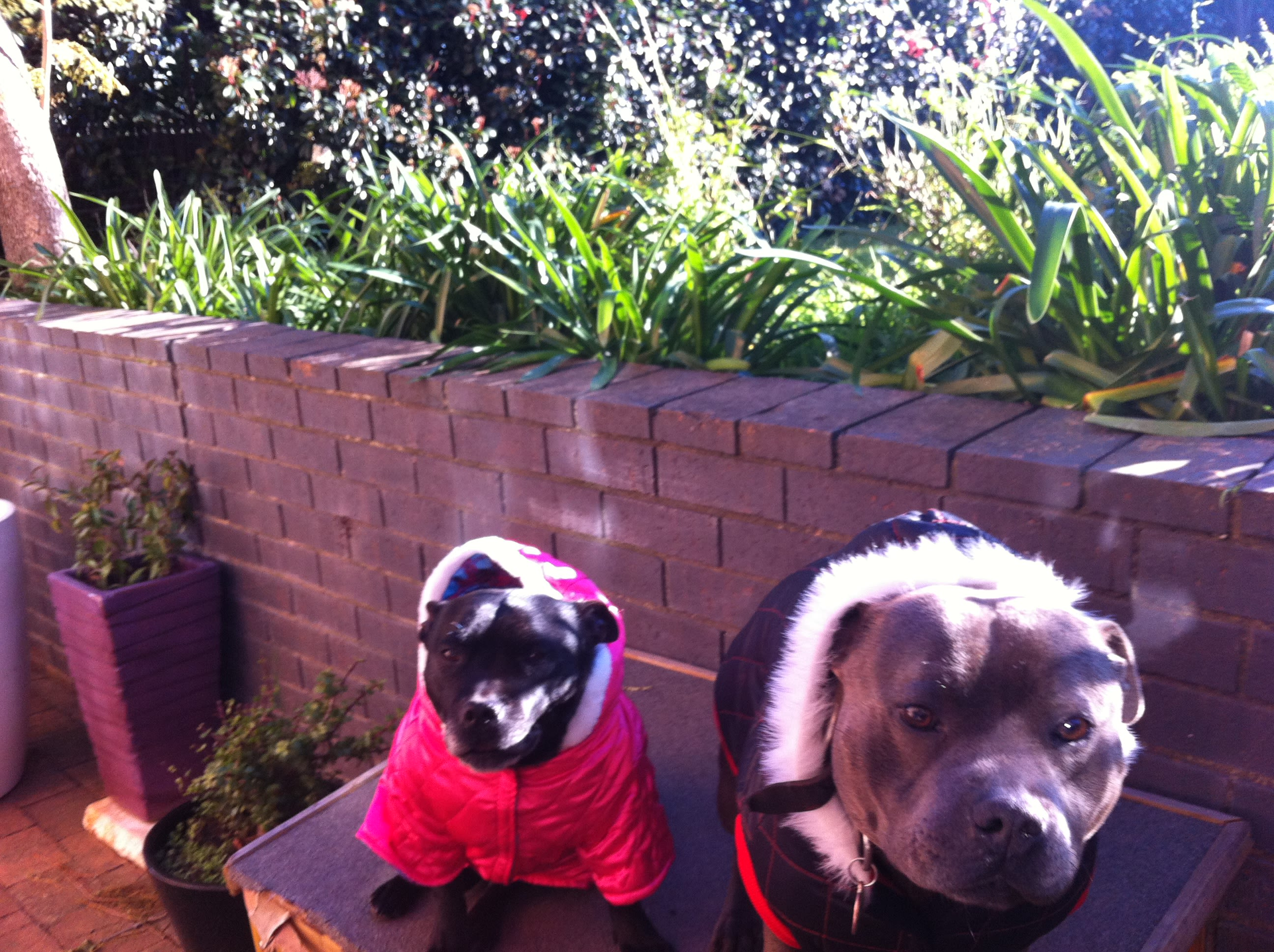 Large dog walking footscray 30 sitters madpaws enthusiastic dog person in footscray solutioingenieria Choice Image