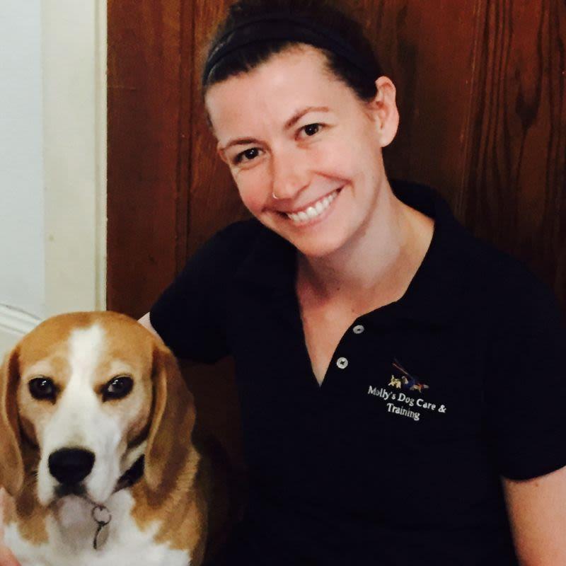 Qualified Dog Carer Newcastle