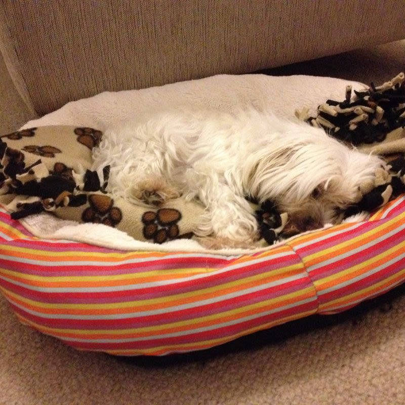 Loving dog minder with a secure yard in Richmond