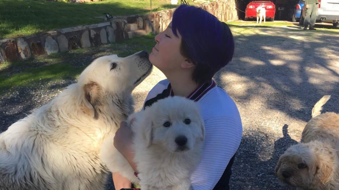 Friendly and experienced pet minder and dog walker! [Jazmine]