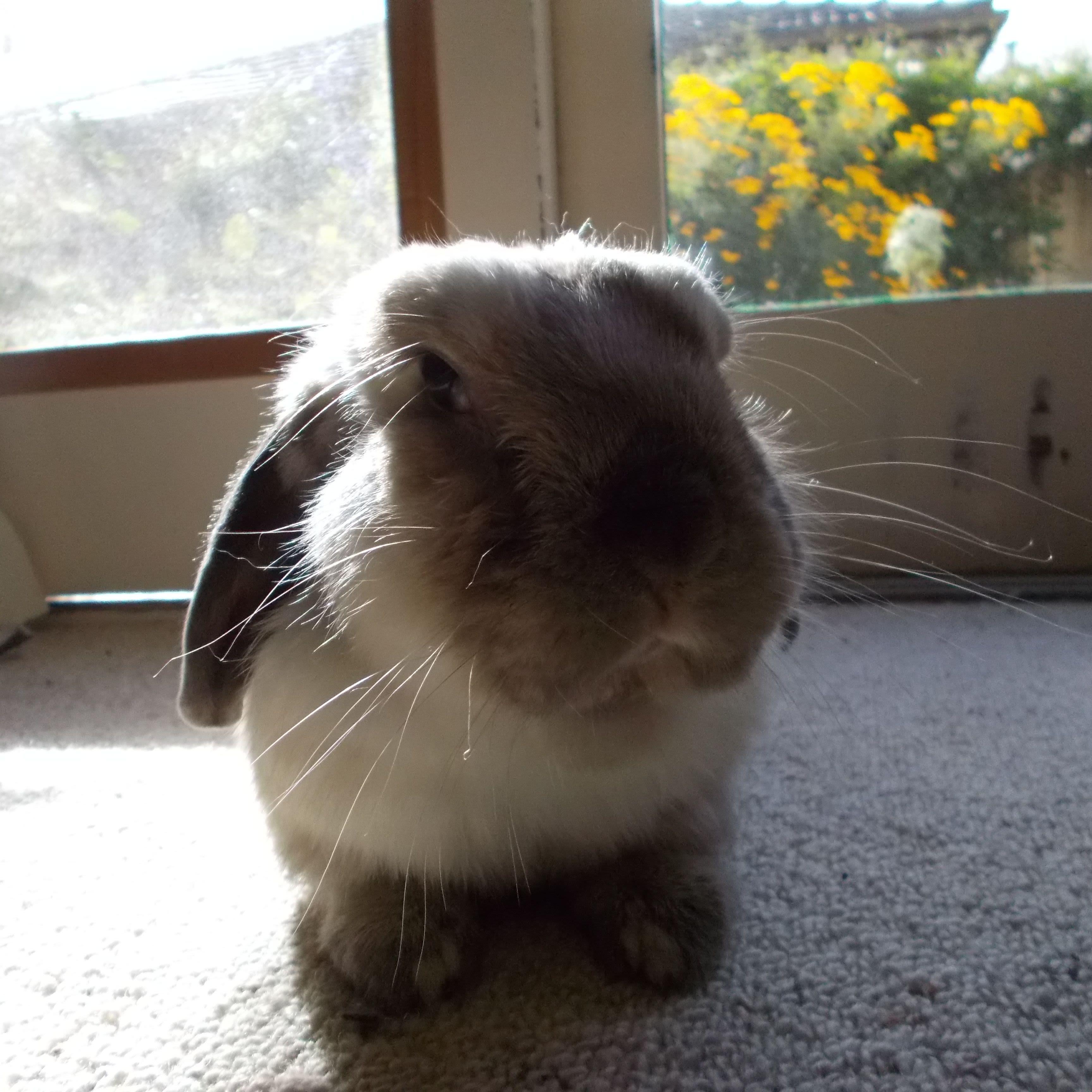 Diamond Creek rabbit & dog lover