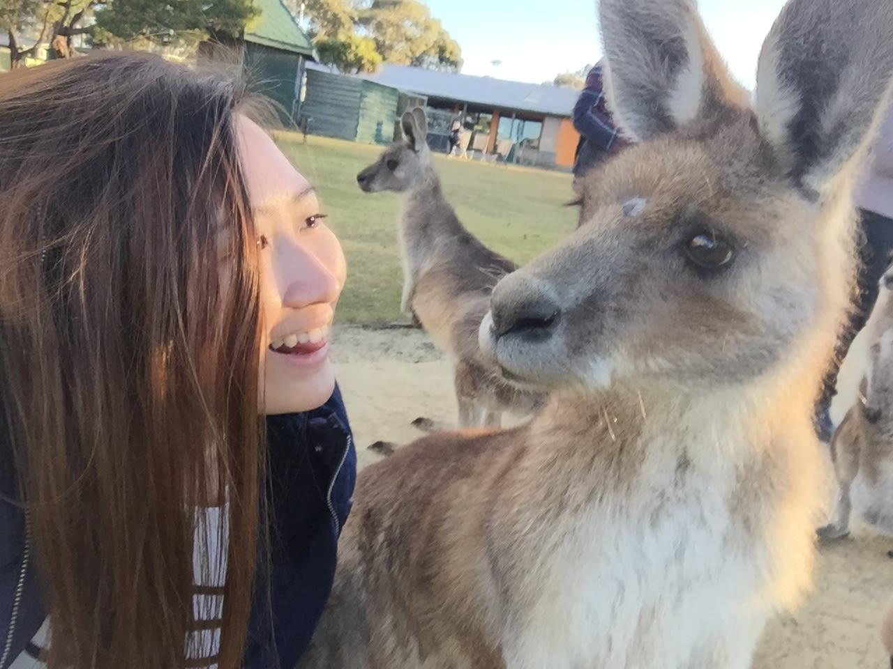 Loving pet family in Melbourne CBD