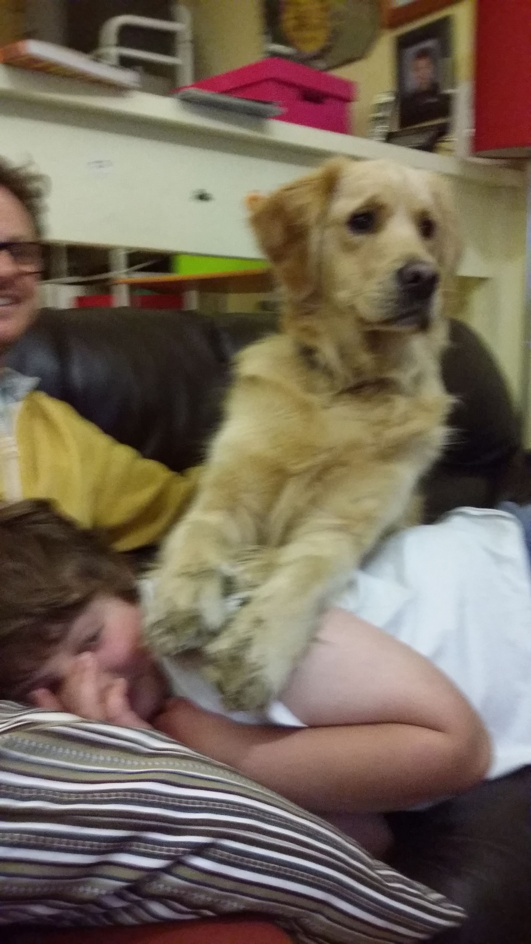 Loving and caring pet sitting family in Greensborough, Melbourne.