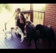 Dogs Best Friend & Companion