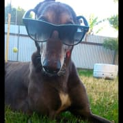 The coolest dog sitter in town!