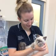 Cat Loving Veterinary Student
