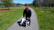 My partner and I are a dog lovers and have always had a dog ( over 20 years) we often assist friends and family with dog minding and walking.